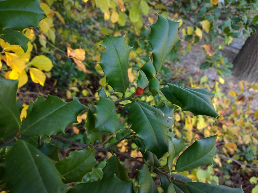 nexus-6p-berry