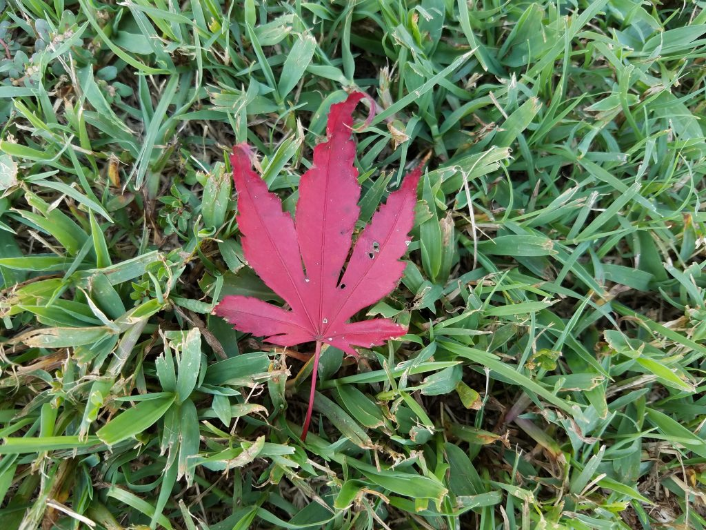 Galaxy S7 Active red leaf photo