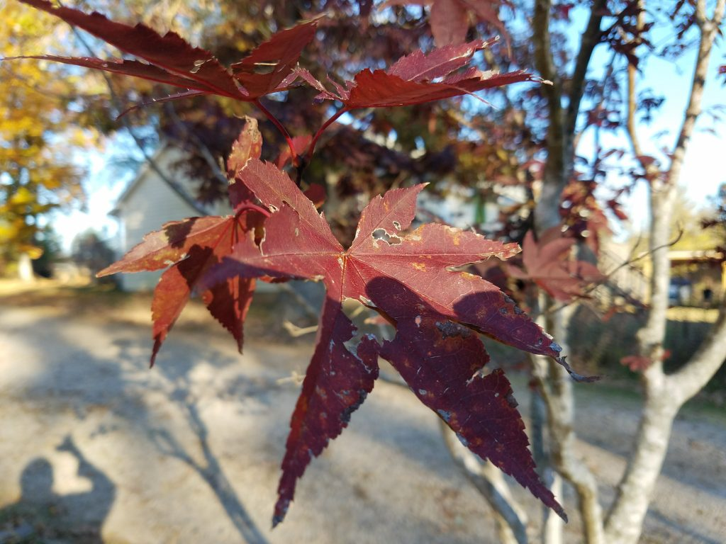 galaxy s7 edge maple leaf up close