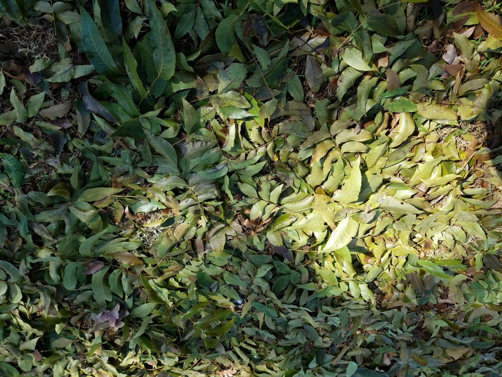 galaxy s7 edge green leaves on ground