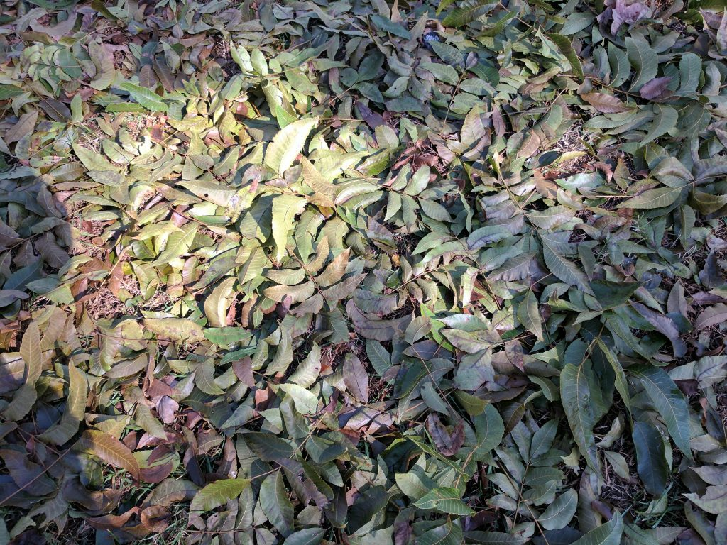 pixel xl green leaves on ground