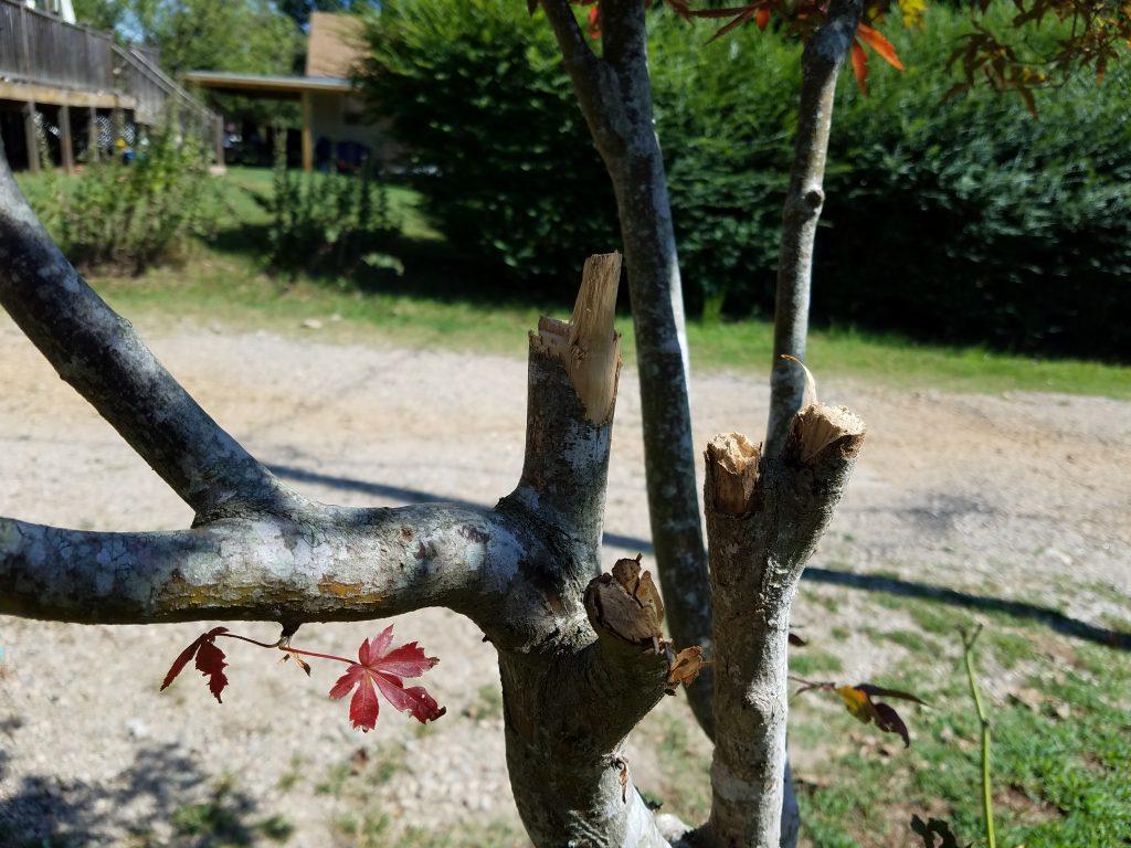 Galaxy S7 Active tree bark vs. HTC 10