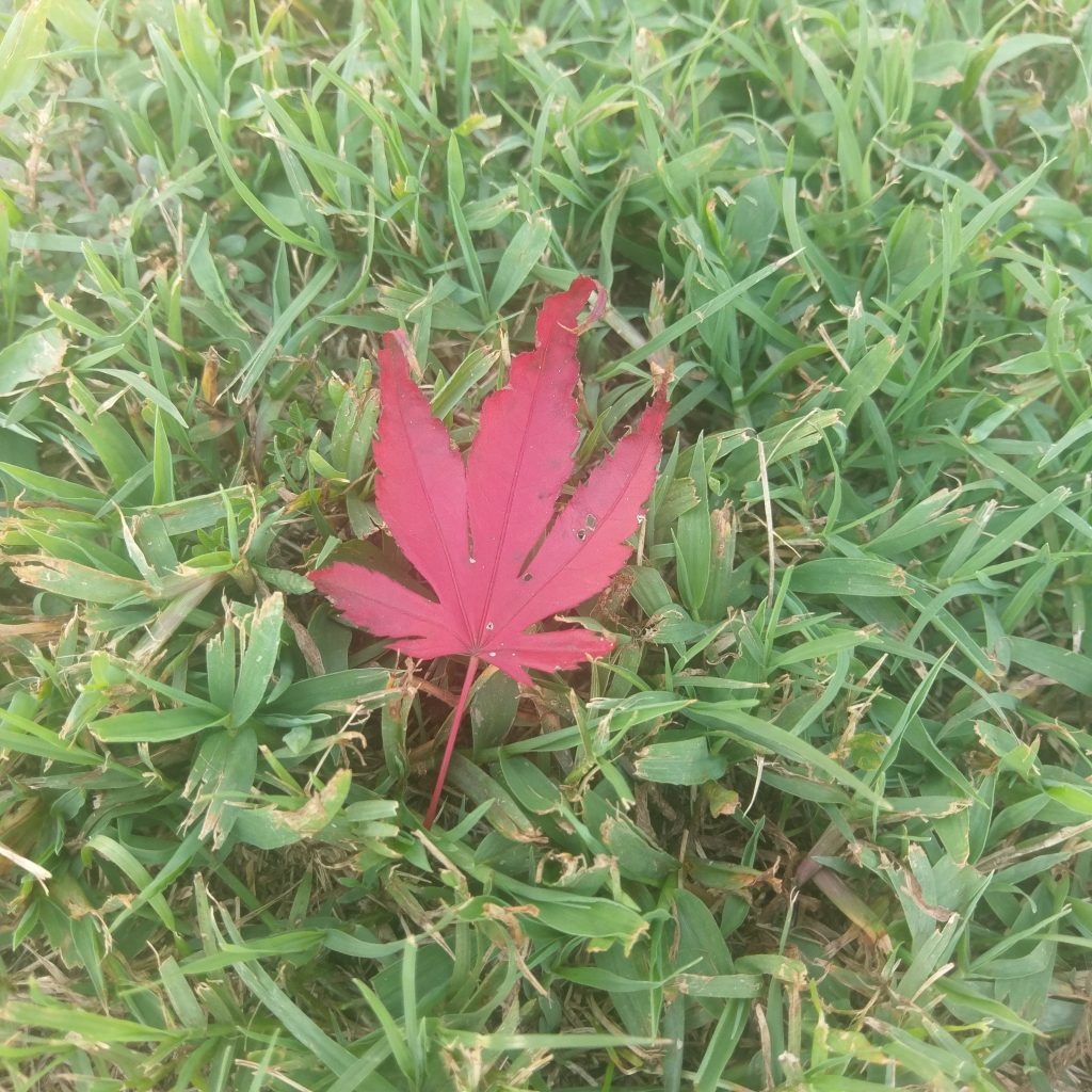 HTC 10 red leaf photo