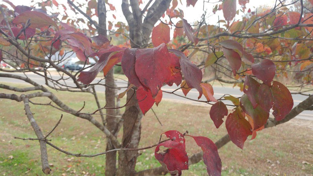 s7 edge review LG G5 fall tree leaves