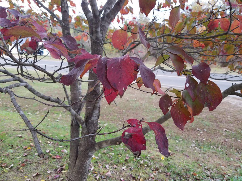 Galaxy S7 edge fall leaf tree