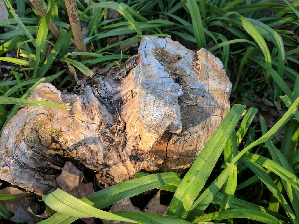 Pixel XL tree stump vs. S7 edge